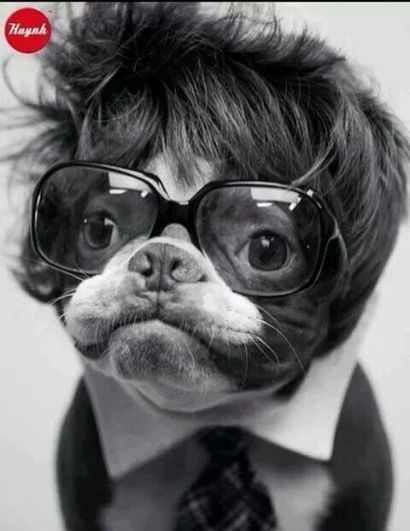 Doggie with glasses