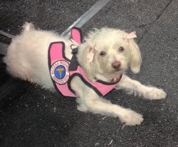 service doggie