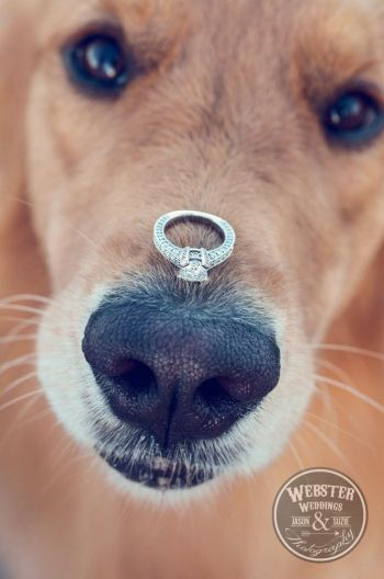 Dog with wedding ring